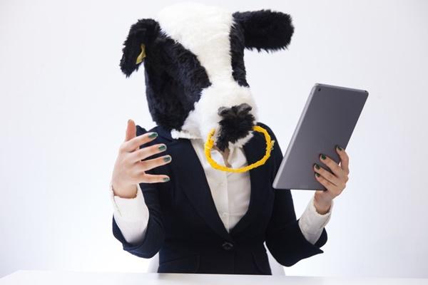 タブレットを使う牛